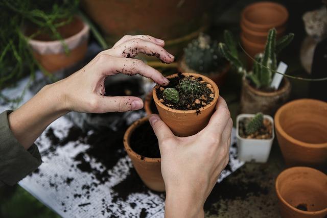práce s kaktusy